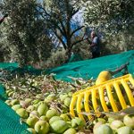 Teanum Olio Extravergine d'Oliva - Recensione, Prezzi e Migliori Offerte. Dettaglio 4
