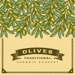 Teanum Olio Extravergine d'Oliva - Recensione, Prezzi e Migliori Offerte. Dettaglio 6